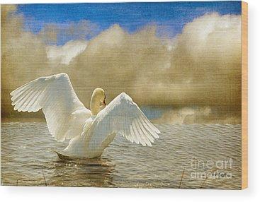 Mute Swan Wood Prints