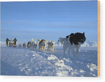 Huskie Wood Prints