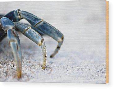 Crab Wood Prints