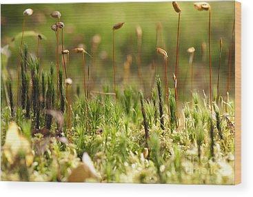 Ecosystem Wood Prints
