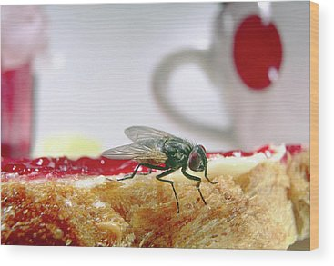 Housefly Wood Prints