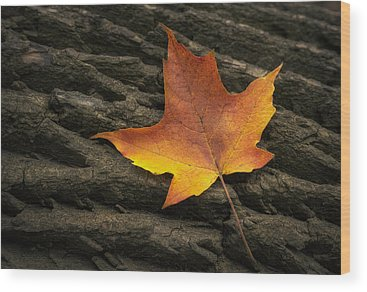 Red Maple Tree Wood Prints