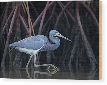 Mangrove Wood Prints