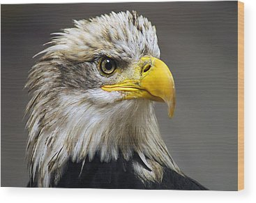 Bald Eagle Wood Prints
