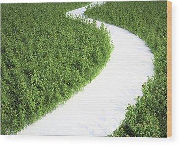 Environmental Science Wood Prints