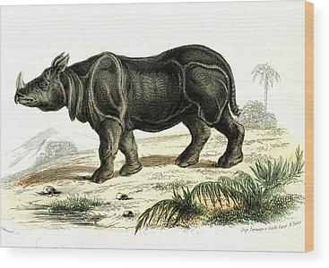 One Horned Rhino Wood Prints