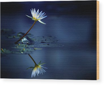 Water Lily Wood Prints