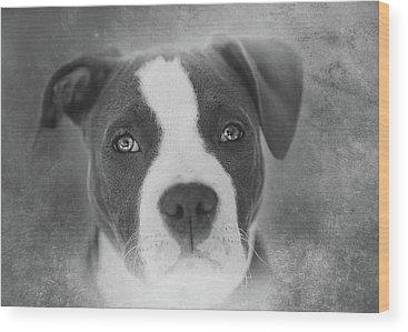 Pitbull Wood Prints