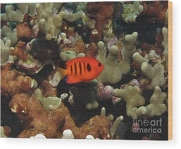 Anglefishes Wood Prints