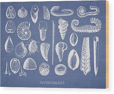 Mussel Wood Prints