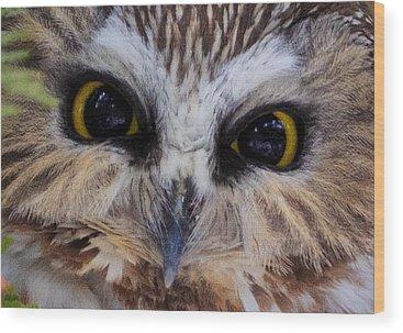 Whet Owl Wood Prints