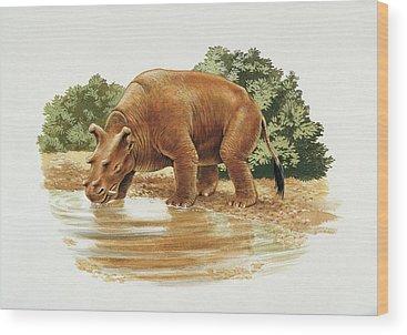 Paleozoology Wood Prints