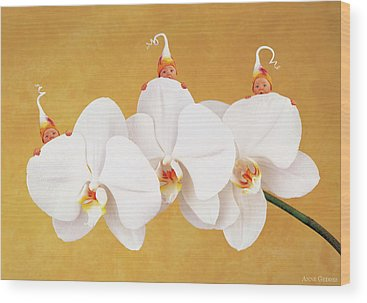 Orchid Wood Prints