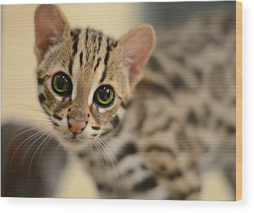 Big Cat Wood Prints