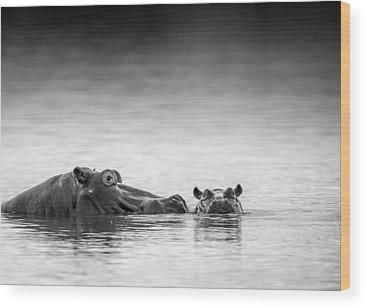 Hippo Wood Prints
