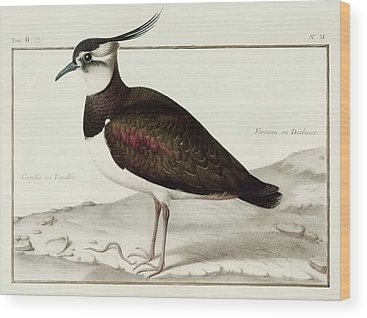 Lapwing Wood Prints