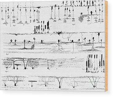 Cajal Wood Prints