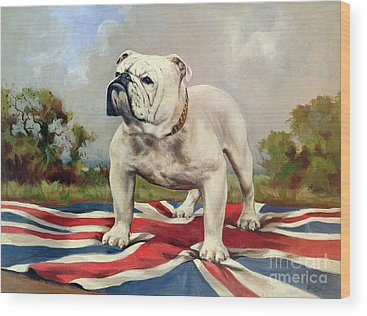 English Bulldog Wood Prints