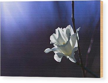 Daffodils Wood Prints