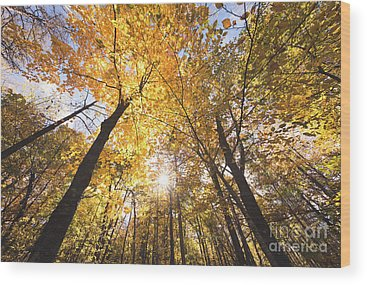 Jay Cooke Wood Prints