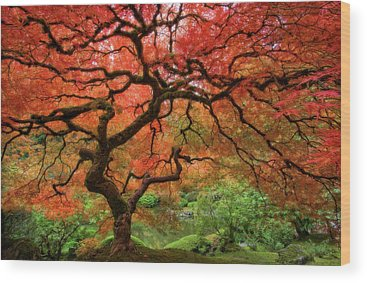 Beautiful Nature Wood Prints