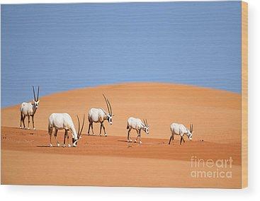 Arabian Wood Prints