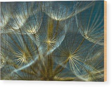 Macro Wood Prints