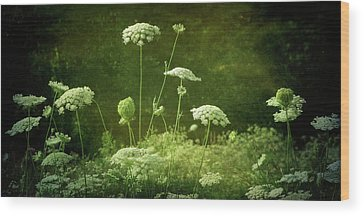 Queen Annes Lace Wood Prints