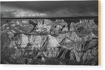Petrified Forest Wood Prints
