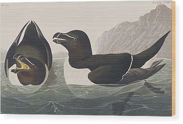 Razorbill Wood Prints