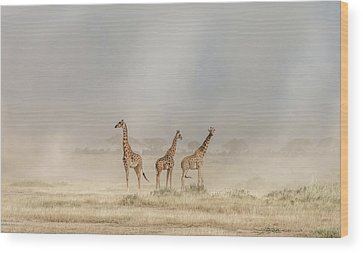 Amboseli Wood Prints