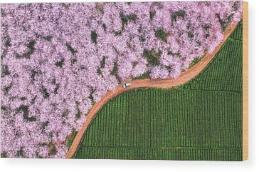 Designs Similar to The Road Of Flower by ??tianqi