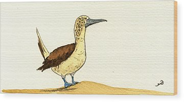 Blue Footed Booby Wood Prints