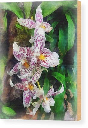 Beallara Wood Prints