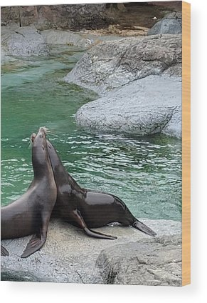 Seal Wood Prints