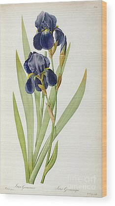 Iris Wood Prints