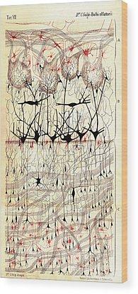 Histology Wood Prints