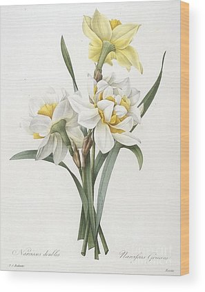 Daffodil Wood Prints
