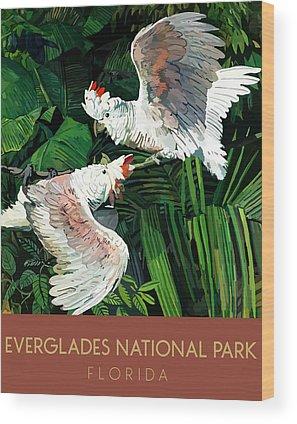 Cockatoo Drawings Wood Prints