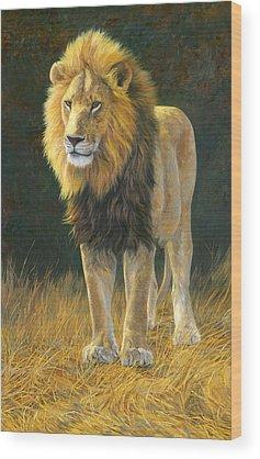 Lion Wood Prints
