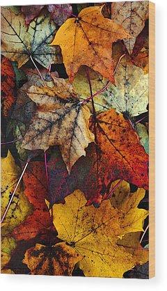 Maple Wood Prints