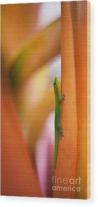 Salamanders Wood Prints