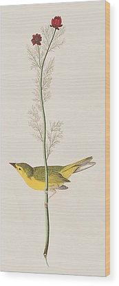 Warbler Wood Prints