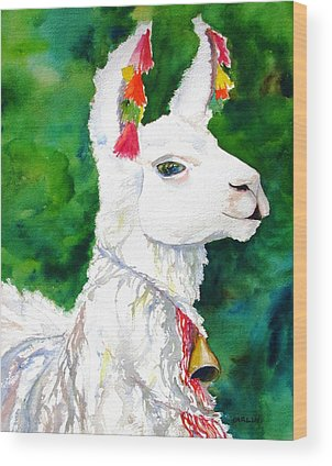 Alpacas Wood Prints