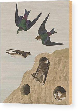 Swallow Wood Prints