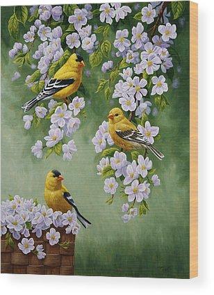Goldfinch Wood Prints