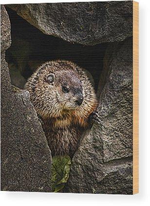 Groundhog Wood Prints