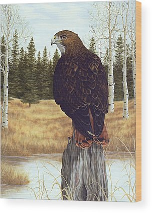 Red Tailed Hawk Wood Prints