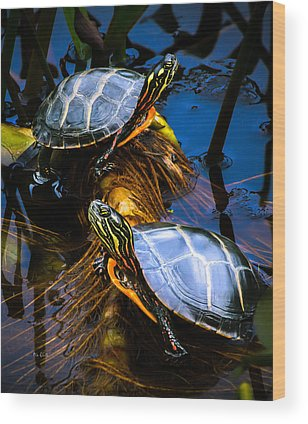 Painted Turtle Photographs Wood Prints