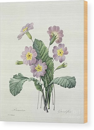 Primrose Wood Prints